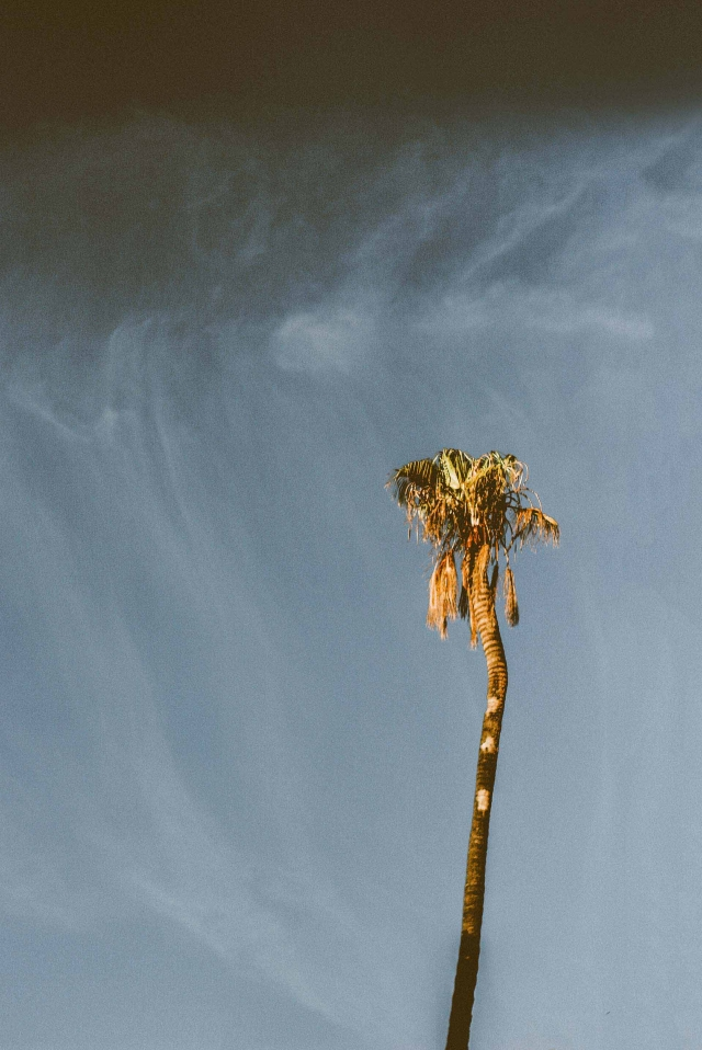 Lonely Palmtree
